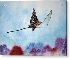 Spotte Eagle Ray 1 Acrylic Print by Jeff Lucas