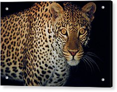 Spotted At Night Acrylic Print by Stefan Carpenter
