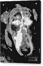 Spotted Dog Black And White Acrylic Print by Minding My  Visions by Adri and Ray