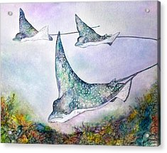 Spotted Eagle Rays Acrylic Print