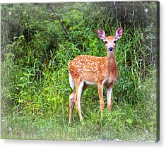 Spotted Fawn Acrylic Print by Marty Koch