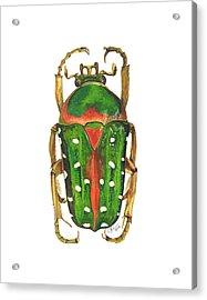 Spotted Flour Beetle Acrylic Print
