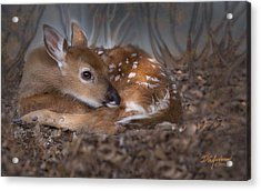 Spotted Innocence Acrylic Print by Don Anderson