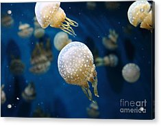 Spotted Jelly Fish 5d24949 Acrylic Print