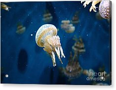 Spotted Jelly Fish 5d24950 Acrylic Print