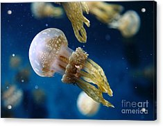Spotted Jelly Fish 5d24955 Acrylic Print