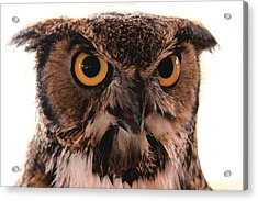 Spotted Owl 1 Acrylic Print