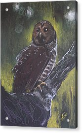 Spotted Owl Acrylic Print by Alicja Coe