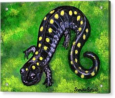 Acrylic Print featuring the painting Spotted Salamander by Sandra Estes