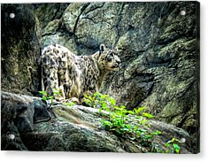 Spotty Thoughts Acrylic Print by Glenn Feron