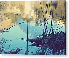 Spread Those Wings And Fly Acrylic Print