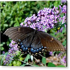 Spread Your Wings And Fly Acrylic Print