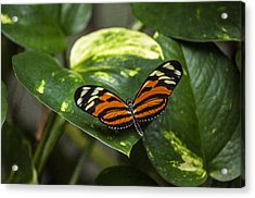 Spread Your Wings Acrylic Print by Ginger Harris