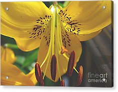 Acrylic Print featuring the photograph Spread Your Wings by John S