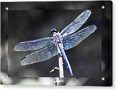 Acrylic Print featuring the digital art Spreading Her Wings by Linda Segerson