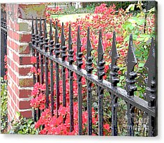 Spring 11 Acrylic Print by Shirley Sparks