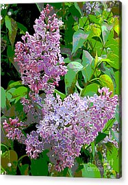 Spring 15 Acrylic Print by Shirley Sparks