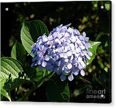Spring 4 Acrylic Print by Shirley Sparks