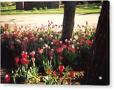 Spring Again Acrylic Print by Barb Baker