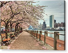 Spring Along The East River Acrylic Print by JC Findley