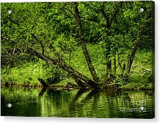 Spring Along West Fork River Acrylic Print by Thomas R Fletcher