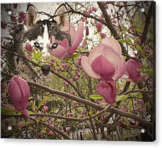 Spring And Beauty Acrylic Print