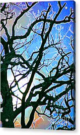 Spring Approaches Acrylic Print by First Star Art