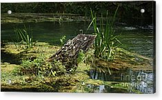 Acrylic Print featuring the photograph Spring At Hodgson Mill by Julie Clements