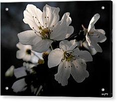 Spring Emerging Acrylic Print