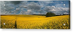 Spring At Oilseed Rape Field Acrylic Print