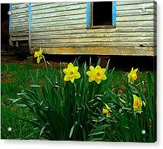 Spring At The Old Home Place Acrylic Print