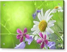 Spring Background Acrylic Print by Pobytov