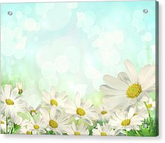 Spring Background With Daisies Acrylic Print