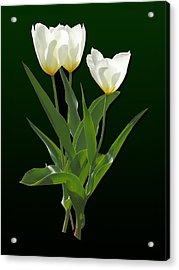 Spring - Backlit White Tulips Acrylic Print by Susan Savad