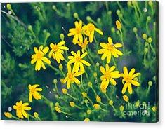 Spring Acrylic Print by Barbara Shallue