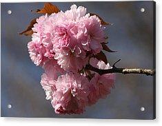 Spring Beauty Acrylic Print by Vadim Levin