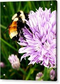 Spring Bee Acrylic Print