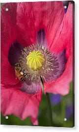 Spring Bees Acrylic Print by Bonita Hensley
