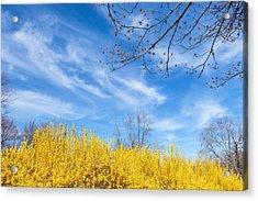 Spring Acrylic Print by Bill Wakeley
