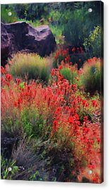 Acrylic Print featuring the photograph Spring Blooms by Barbara Manis