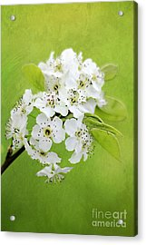 Spring Blooms Acrylic Print by Darren Fisher