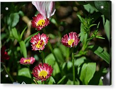 Acrylic Print featuring the photograph Spring Blooms by Tara Potts