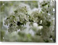 Acrylic Print featuring the photograph Spring Bloosom by Sebastian Musial