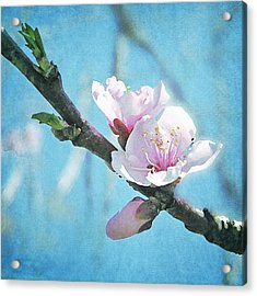 Acrylic Print featuring the photograph Spring Blossom by Jocelyn Friis