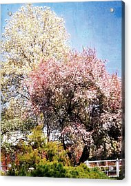 Spring Blossoms Acrylic Print by Marty Koch