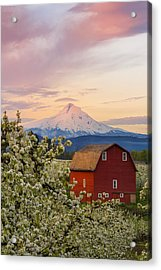 Spring Blossoms Sunrise Acrylic Print by Ryan Manuel