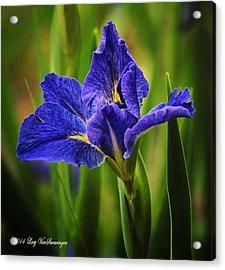 Spring Blue Iris Acrylic Print
