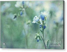 Spring Blues Acrylic Print by Priska Wettstein