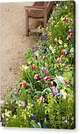 Spring Border Acrylic Print by Anne Gilbert