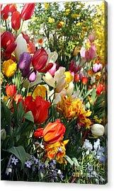 Acrylic Print featuring the photograph Spring Bulb Bonanza by Mary Lou Chmura